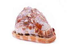 Antique carved seashell. Stock Photos