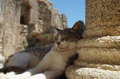Antique cat Royalty Free Stock Photo