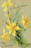 Antique Christmas greeting postcard. Narcissus. 1907. Russian text Royalty Free Stock Photos