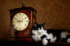 Antique clock and cat Royalty Free Stock Photos