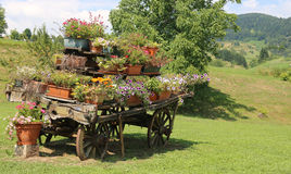 Antique decorate wood cart full of blooming flowers in the mount Royalty Free Stock Images