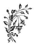 Antique flowers engraving (vector) Royalty Free Stock Image