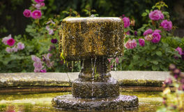 Antique fountain on background of roses Royalty Free Stock Photo