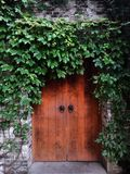 Antique gate full of vines Royalty Free Stock Photos