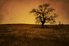 Antique Grunge Bare Oak Tree Royalty Free Stock Photo
