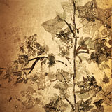 Antique grunge floral background stock photos