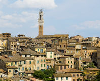 Antique houses and Mangia tower. Siena, Italy Stock Photography