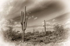 Antique image of the desert Royalty Free Stock Photos