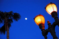 Antique Lampost at Night. With Palm Tree and Backlit Moon Royalty Free Stock Photos