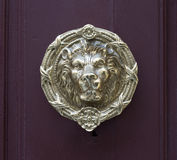 Antique lion head pull handle knob on a vintage wooden red do Stock Images