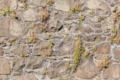 Antique natural stonewall Stock Images