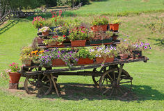 Antique ornate wood cart full of blooming flowers Stock Photos