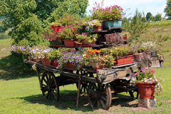 Antique ornate wood cart full of blooming flowers in the Meadow Stock Photography