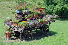 Antique ornate wood cart full of blooming flowers in summer Stock Photography