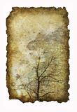Antique paper with image of tree Royalty Free Stock Images