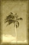 Antique photo of exotic palm Royalty Free Stock Photos