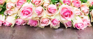 Antique pink roses, Banner Stock Images