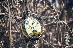 Antique pocket watch broken in wheat field Royalty Free Stock Image