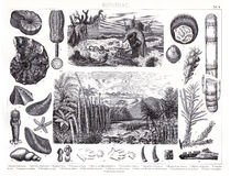 1874 Antique Print of Prheistoric Jurassic and Cambrian Period Plants and Animals Stock Image