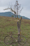 Antique or retro oxidized bicycle outside Royalty Free Stock Image
