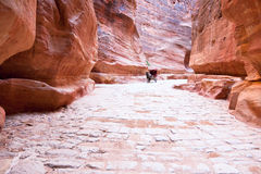 Antique roman paved road in Siq passage in city Pe Stock Images
