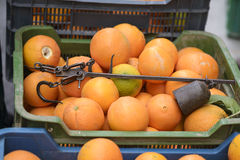 Antique Roman steelyard, or Roman balance in a box with oranges in the marketplace Stock Image
