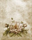 Antique rose Royalty Free Stock Photos