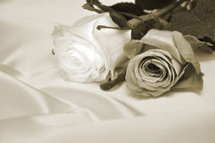 Antique roses. Two roses over silk background sepia tone Stock Image