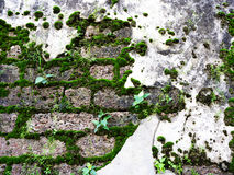 Antique ruin wall with moss on laterite stone texture Royalty Free Stock Photography