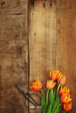 Antique Scissors and Tulips Royalty Free Stock Photo