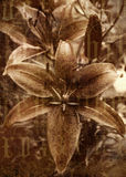 Antique Sepia Flower Photo. Sepia tiger lily flower with grungy alphabet text royalty free stock photos