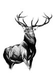 Antique stag art drawing handmade nature. I am a traditional artist. This is a handmade drawing on paper. I use pencil for this Royalty Free Stock Photography