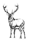 Antique stag art drawing handmade nature Stock Photos