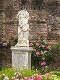 Antique statue of the goddess on a background of ruins and roses stock photo