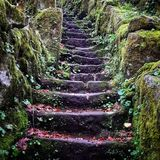 Old stone stairs forest moss royalty free stock images