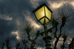 Antique streetlight and pollard willows Royalty Free Stock Images