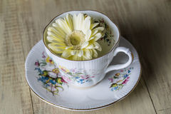 Antique Teacup with yellow daisy flower Stock Image