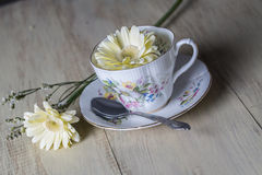 Antique Teacup with yellow daisy flower Stock Images