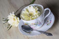 Antique Teacup with yellow daisy flowers Stock Photos