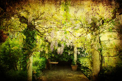 Antique textured picture of a pergola with chinese wisteria Stock Photo