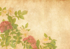 Antique textured roses Royalty Free Stock Photos