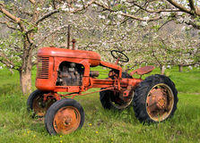 Antique Tractor and orchard Royalty Free Stock Image