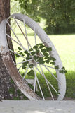 Antique tractor wheel, vine and tree Stock Images