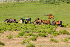 Antique Tractors and a Few Cows Stock Photography