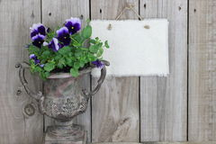 Antique vase with purple flowers (pansies) and blank sign stock photography