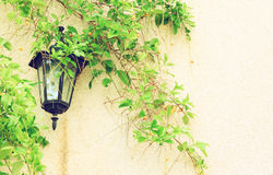 Antique Victorian Outdoor Wall Lamp surrounded by green leaves. filtered image. Stock Photography