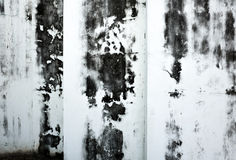 An antique wall grunge texture. Black and white stock photography
