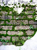Antique wall with moss on laterite stone Royalty Free Stock Images