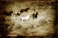 Antique Western Horse Stock Photography