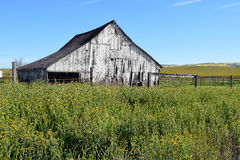 Antique White Barn Stock Image